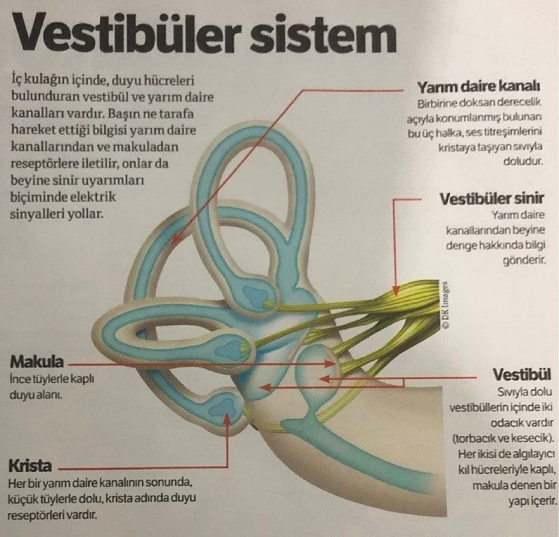 Vestübüler Sistem