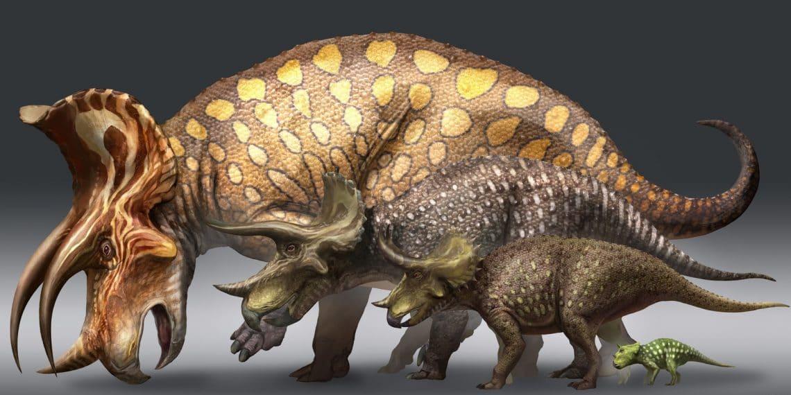 Büyük boynuzlar, kendilerini yırtıcılara karşı korumak için idealdi.