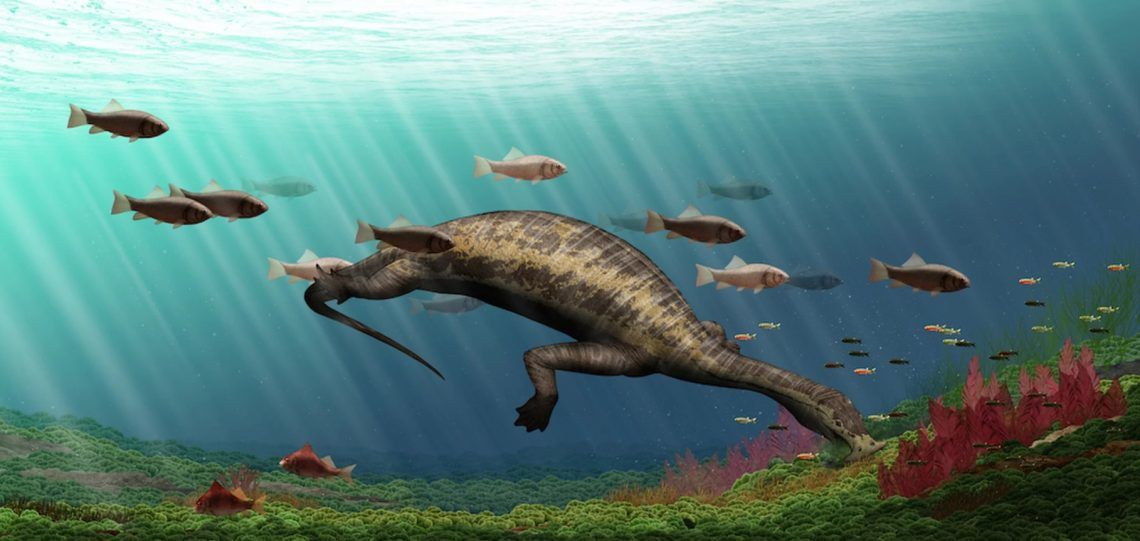Bazı pleziozorların uzun ve esnek boyunları vardı. Bu sayede balık yakalayabiliyorlardı.